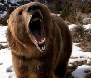 """Wędrują po szlakach, """"szusują"""" na stokach, spacerują po deptakach. Zwierzęta w Tatrach żyją jak ludzie"""