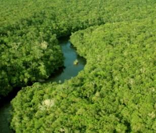 Катастрофічні наслідки лісових пожеж в Амазонії