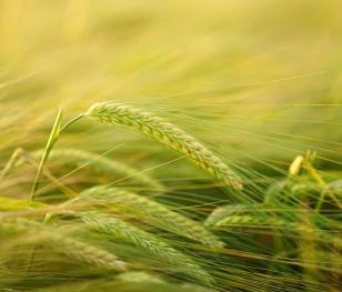 W ciągu dekady ubyło 13 procent gospodarstw rolnych