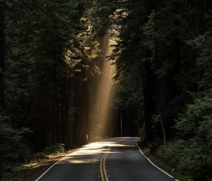 Wody opadowe z dróg trafią do lasów. Pomogą w walce z suszą
