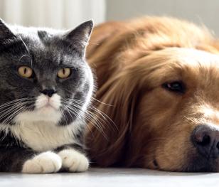 У Сеулі перевірятимуть котів та собак на COVID-19