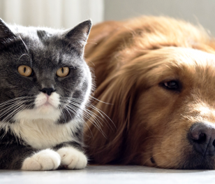 Seul przebada na COVID-19 koty i psy