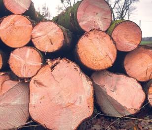 За рік у Польщі вирізали стільки дерев, як протягом 9 років