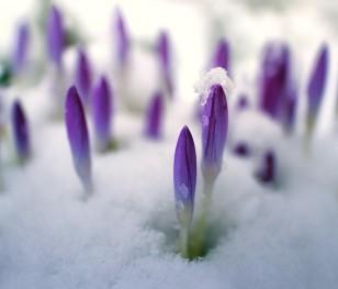 Do Polski zbliża się ocieplenie