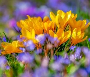 Розпочалася астрономічна весна