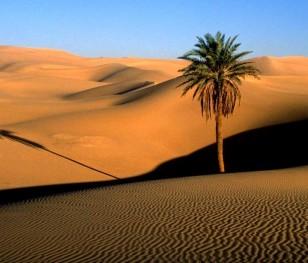 Саудівська Аравія висадить у пустелі мільярди дерев