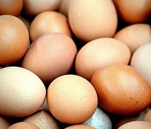Polska szóstym producentem jaj kurzych w UE