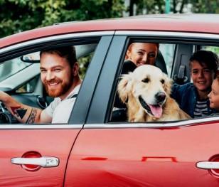Майже половина поляків хоче відправитися у відпустку на власному авто