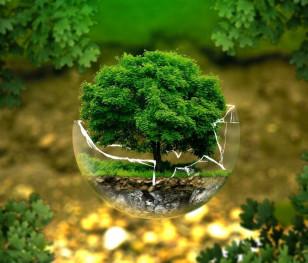 Європейський Союз хоче висадити мільярди дерев