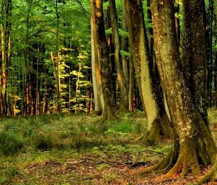 Близько третини видів дерев у світі – під загрозою зникнення