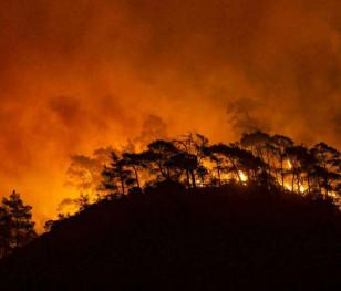 Польща запропонувала Туреччині допомогу в боротьбі з хвилею пожеж
