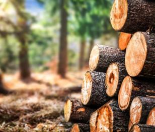 Wzrosły ceny drewna